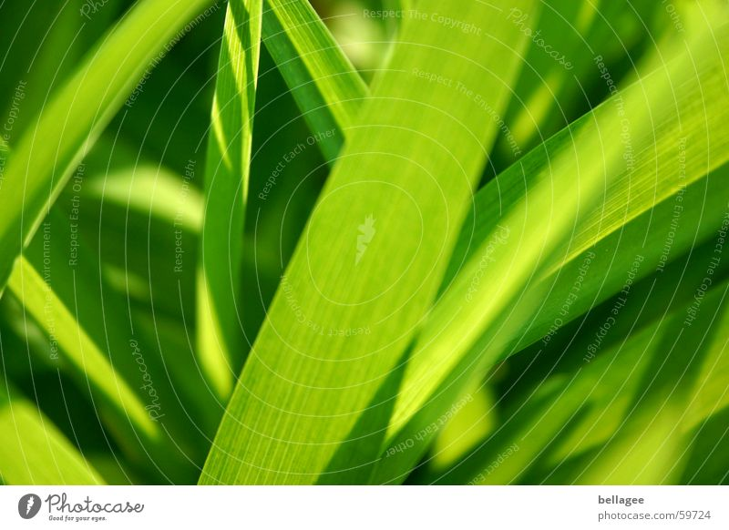 Green Summer Leaf Lamp Meadow Grass Spring Lawn Lust Blade of grass Juicy