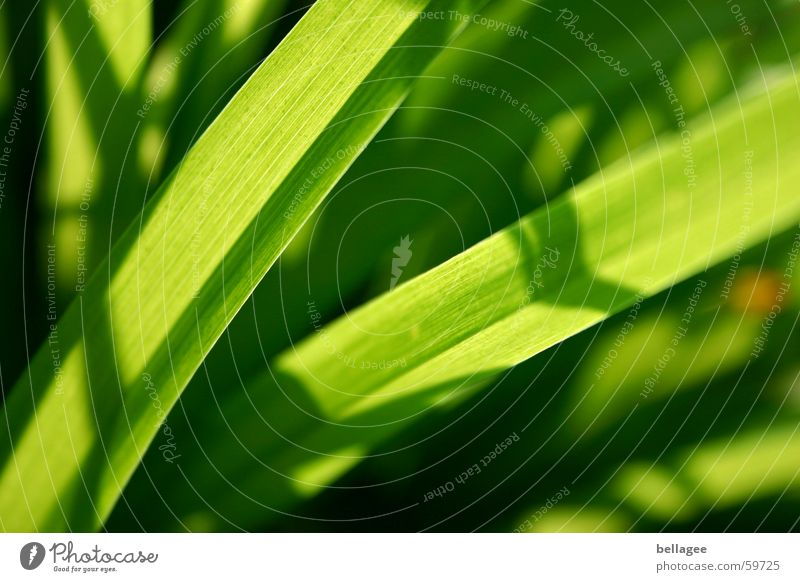 ...so green Green Meadow Grass Blade of grass Light Lamp Energy industry Structures and shapes Exterior shot