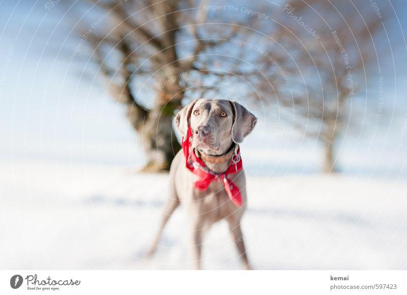 Dog Sky Nature Beautiful Sun Tree Landscape Animal Winter Environment Snow Ice Wait Stand Beautiful weather Frost