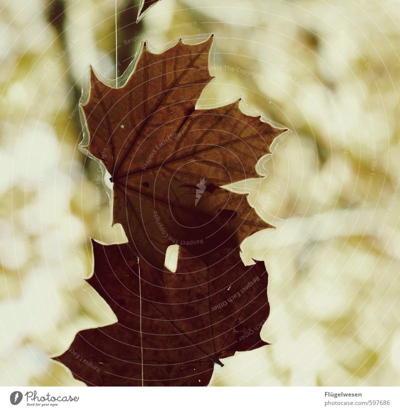 Preserving the autumn Environment Nature Landscape Plant Animal Elements Autumn Climate Leaf Foliage plant Hang Fatigue Autumnal Autumn leaves Autumnal colours