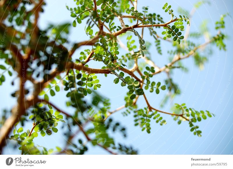 Sky Tree Green Plant Leaf Branch Tree trunk Twig