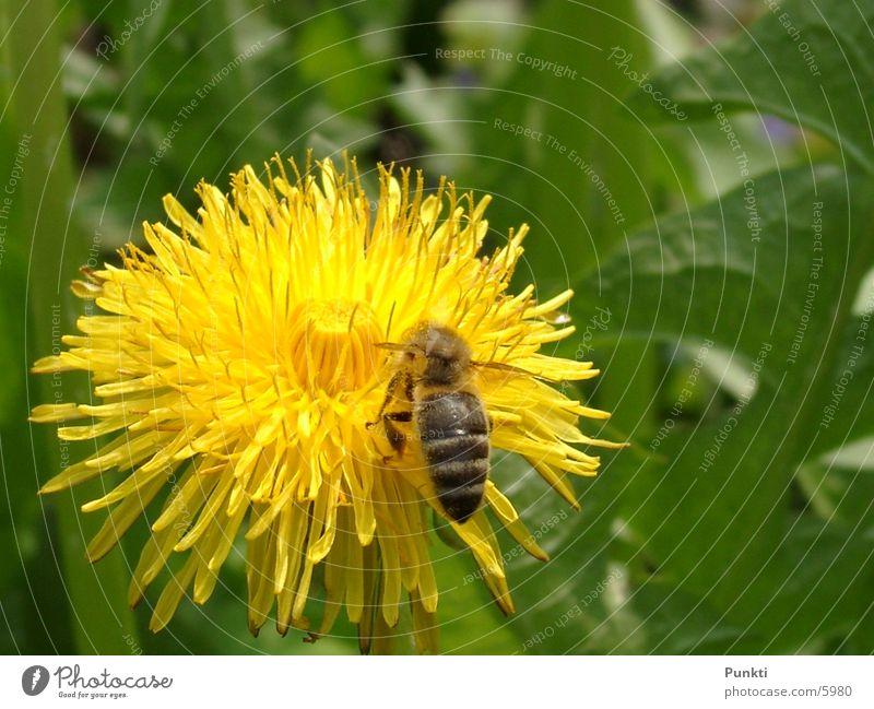 Nature Flower Plant Animal Bee