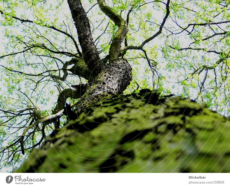 beetle perspective Tree Spring Forest Tree bark Tree trunk Beetle Tall Sky Twig Branch