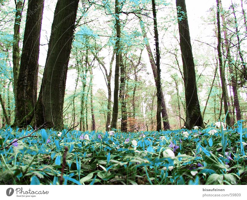 View of a Dahu Woodground Forest Ground cover Cyan Turquoise Tree trunk False Washed out Nature dahu thereabouts no dahüs