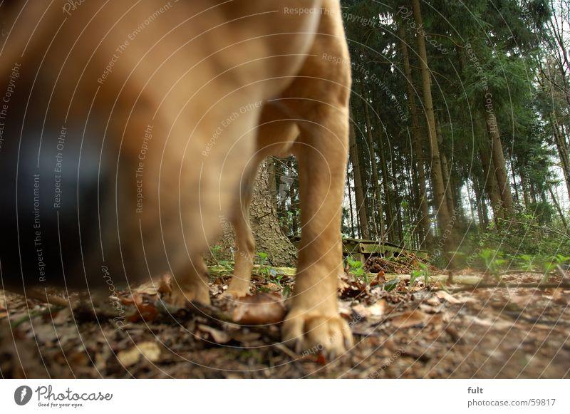nose Dog Tree Forest Animal Odor Pelt Woodground Leaf Nose Nature Floor covering