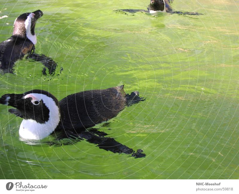only flying is better Penguin Bird Summer Water