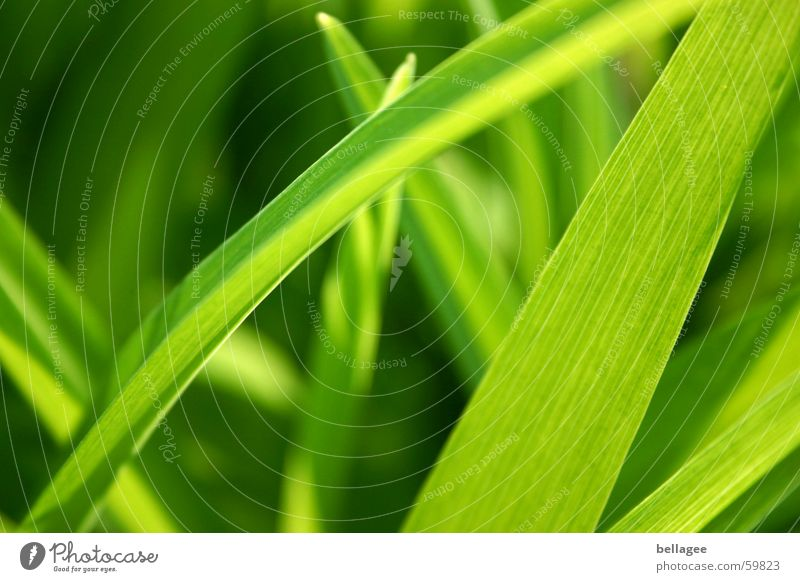 it is green so...3 Leaf Grass Blade of grass Green Meadow Light Spring Energy industry Exterior shot