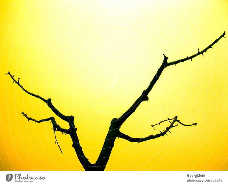 demontree Tree Bar Black Yellow Flashy Silhouette Exterior shot naked dark crude location shot
