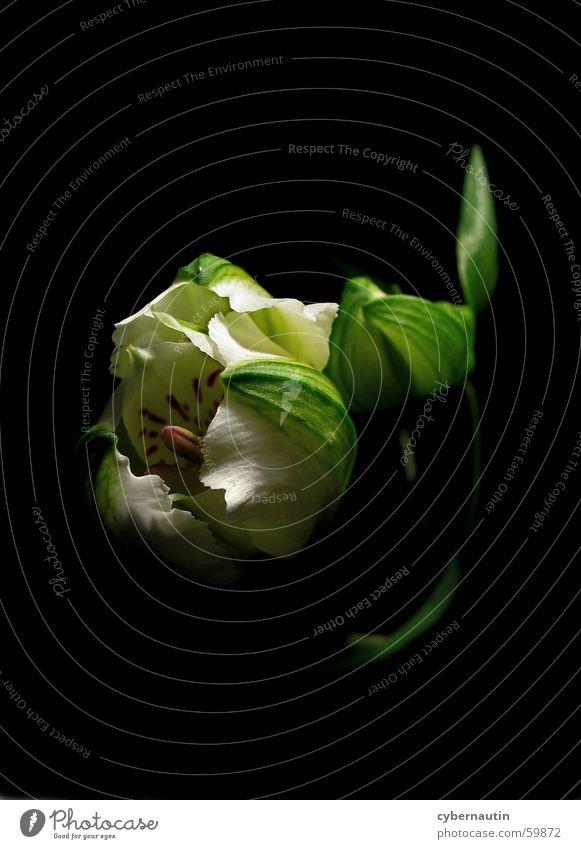 Flower Leaf Blossom Stalk Bud Pistil Calyx