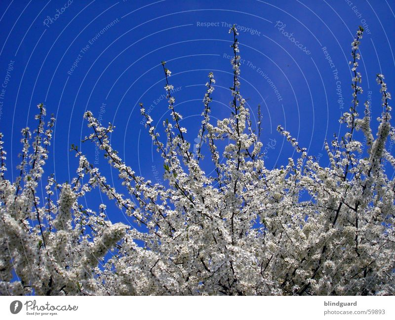 flower dream Blossom Spring Azure blue Jump Sky Blue Branch