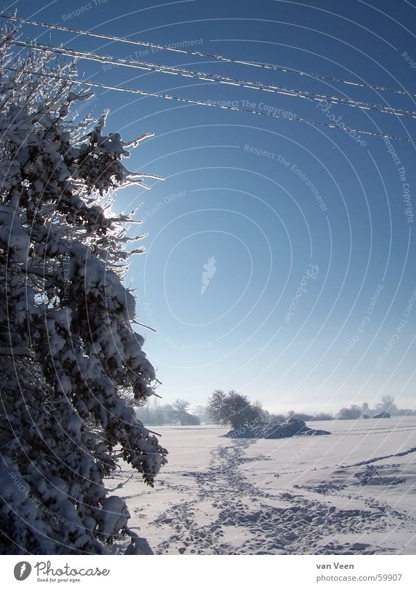 Sky Blue White Sun Tree Landscape Calm Far-off places Winter Cold Lanes & trails Snow Freedom Germany Glittering Ice