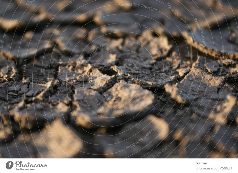 earth crust Light Blur Crust Dry Earth Wood grain Structures and shapes Shadow Floor covering Dirty dirt Close-up ground