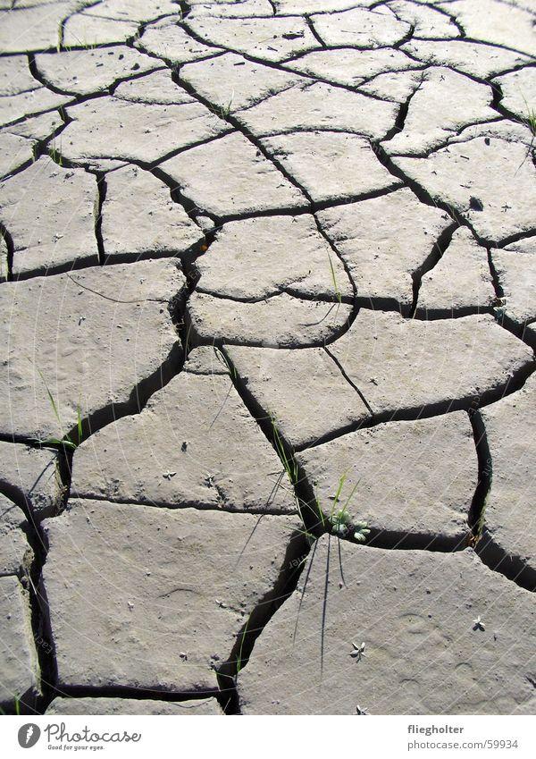 Water Summer Grass Warmth Hope Desert Switzerland Thin Physics Dry Blade of grass Storm Crack & Rip & Tear Mud Deluge Canton Uri