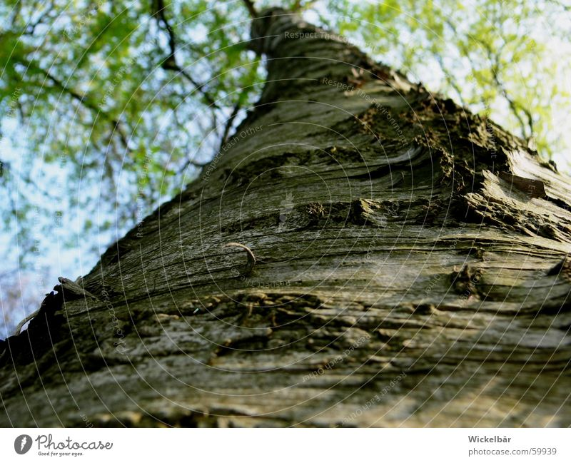 Beetle perspective - the way is still long Tree Tree bark Spring Forest Wood Tall Nature
