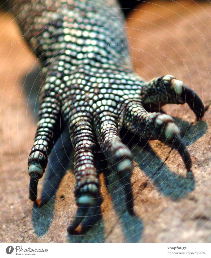 dragon hand Iguana Lizards Saurians Claw Pore Zoo Animal Wood Blur Barn