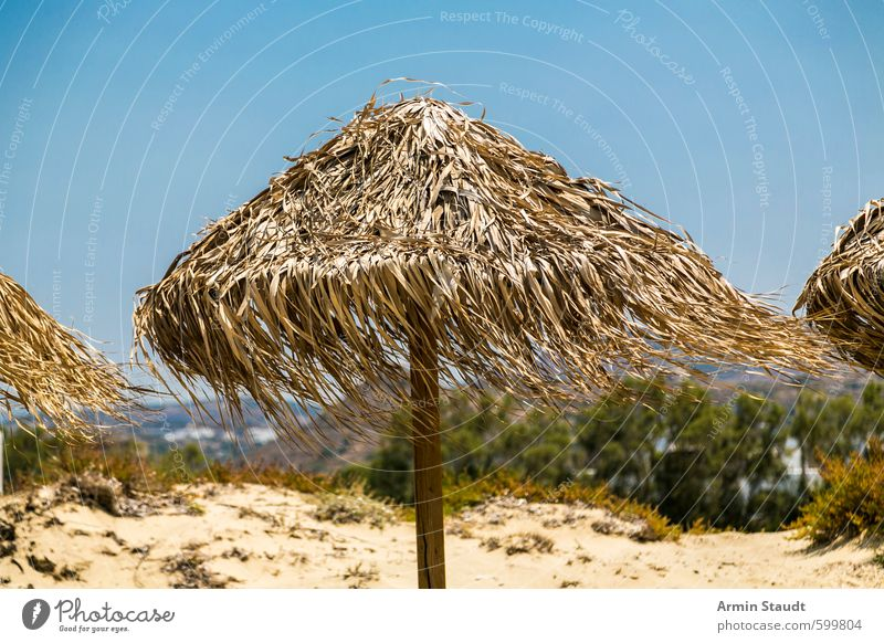 Parasol made of reed in the wind Relaxation Vacation & Travel Tourism Summer Summer vacation Sunbathing Beach Nature Sand Cloudless sky Beautiful weather Wind