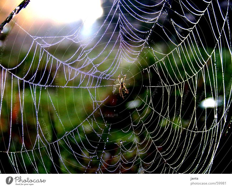 In the morning dew Spider's web Drops of water Sunrise Meadow Morning Fear Panic Might Rope Dew Nature jarts