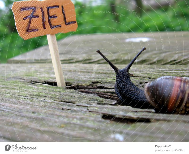 Nature Green Wood Lanes & trails Small Search Signs and labeling Success Bench Target Snail Match Go under Pride Slowly