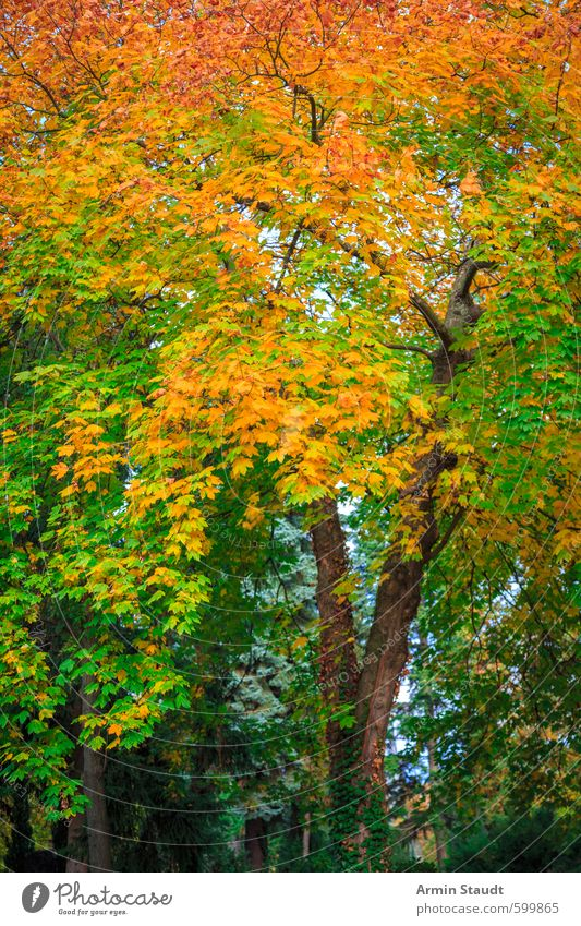 Autumn tree Nature Animal Beautiful weather Tree Park Forest Breathe Relaxation Esthetic Natural Green Orange Moody Colour Calm Background picture Autumn leaves