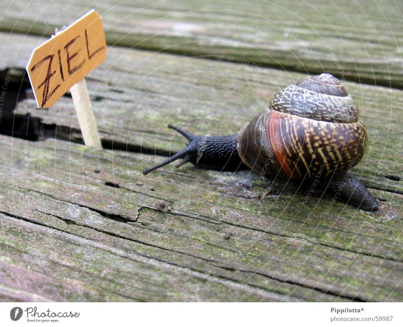 Nature Wood Lanes & trails Small Signs and labeling Success Target Career Snail Pride Slowly Resume
