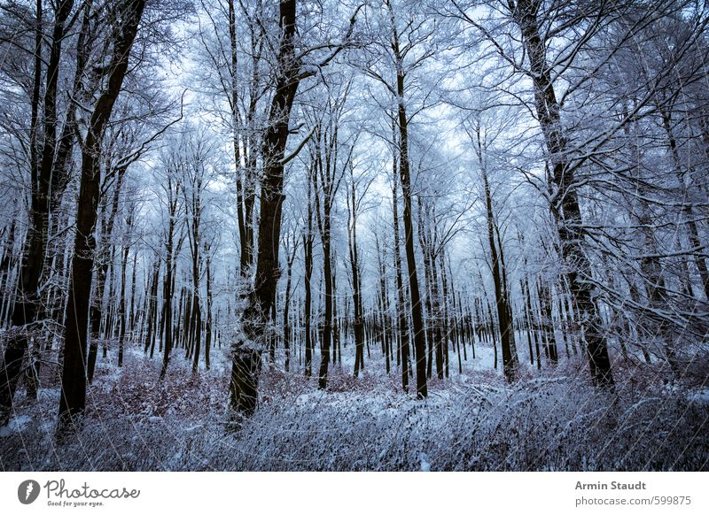 View into the snow-covered forest Winter Snow Winter vacation Nature Landscape Tree Forest Dark Cold Blue Moody Loneliness Adventure Relaxation Mysterious