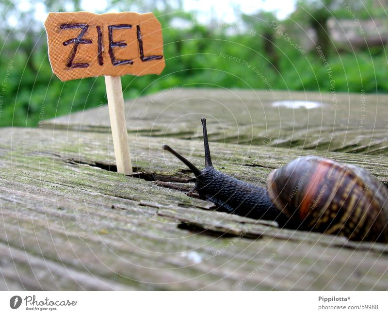 Nature Green Life Wood Lanes & trails Small Search Signs and labeling Success Target Profession Career Snail Match Go under Pride