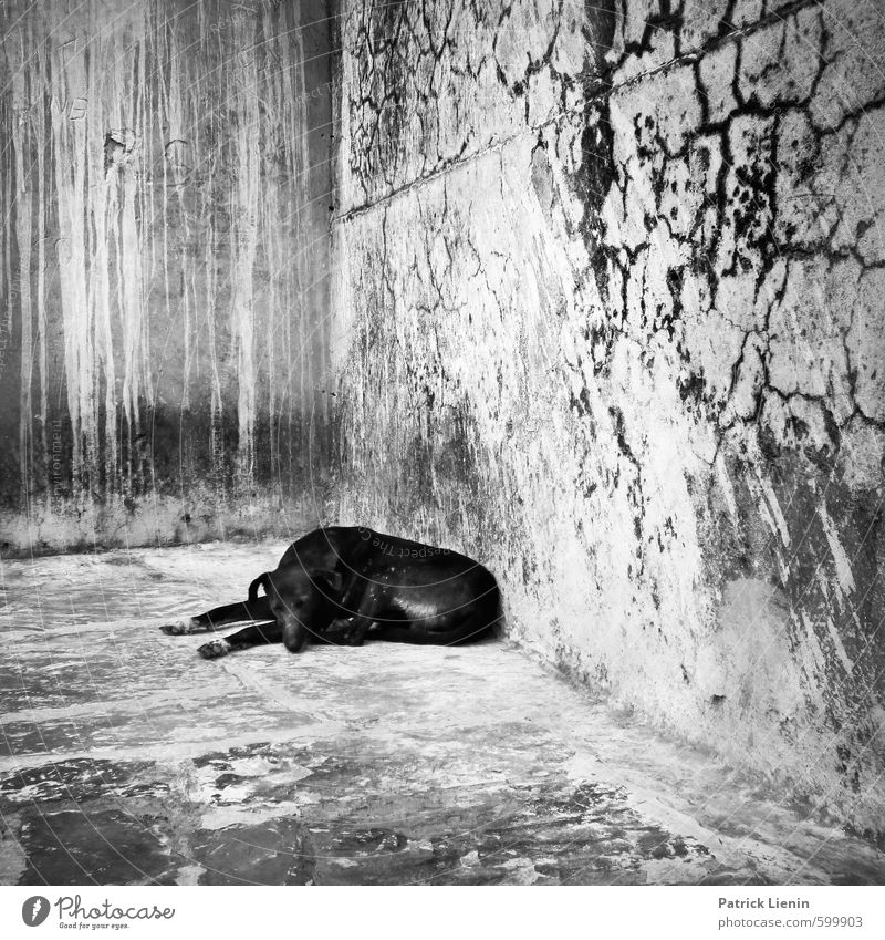 Not Black And White Wall (barrier) Wall (building) Animal Wild animal Dog 1 Sleep Poverty Threat Dirty Dark Disgust Free Illness Natural Safety Protection