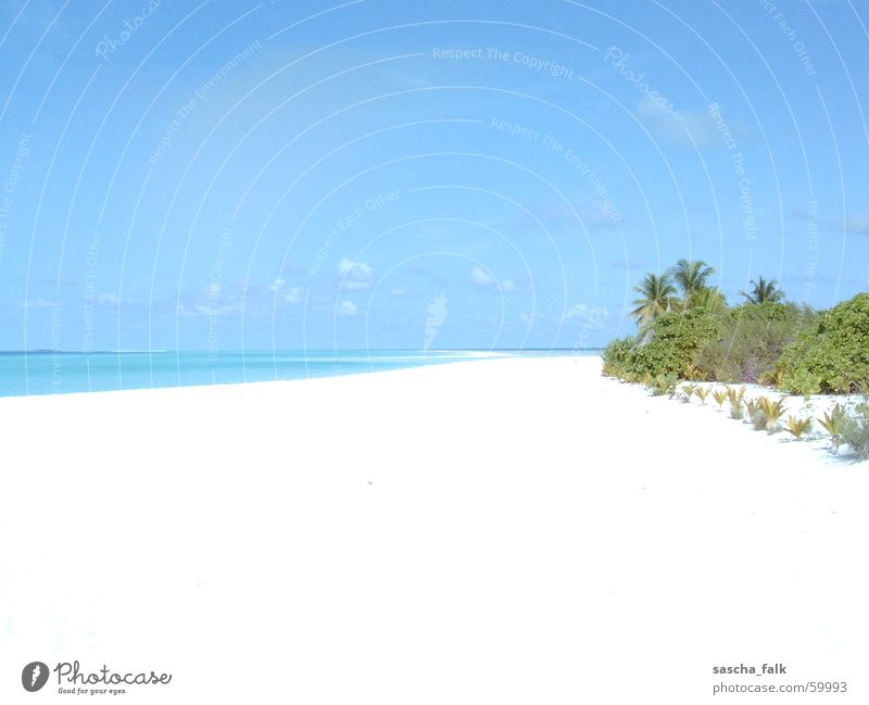 Maldives Ocean Beach Vacation & Travel Relaxation Palm tree white beach