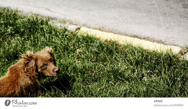 poke Chile Arica Vacation & Travel Dog Grass Meadow Brown Curbside North Street Compassion