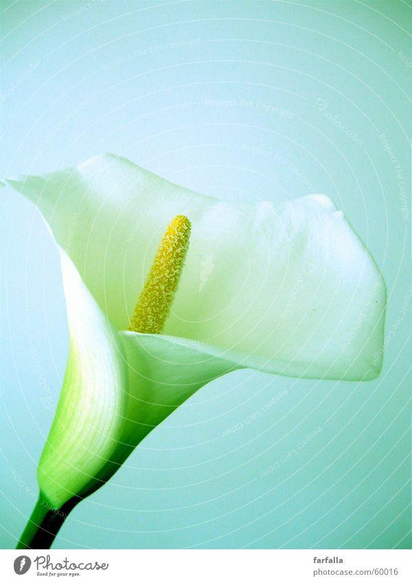 White Flower Still Life