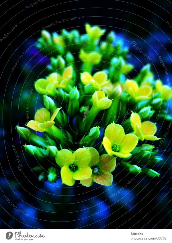 flowers Yellow Flower Green defocused blue kimako Blur
