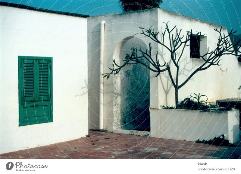 someone at home? House (Residential Structure) Shutter Tree White Wall (barrier) Lanzarote Door