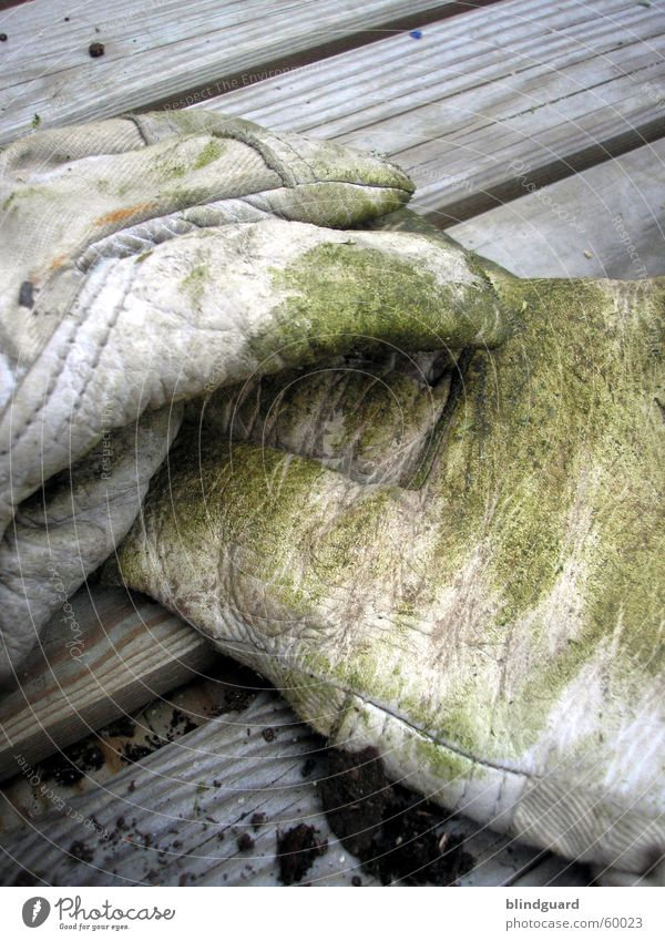 Green Work and employment Grass Garden Wood Dirty Industry Break Protection Services Craft (trade) Leather Gloves Gardening Gardener Closing time