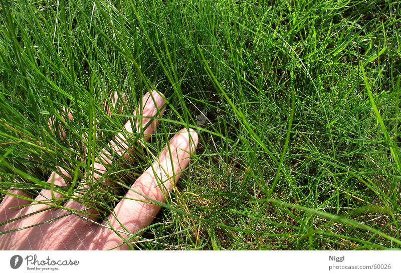 Hand in the grass room Meadow Grass Green Fingers Summer World Cup Lawn Nature niggl