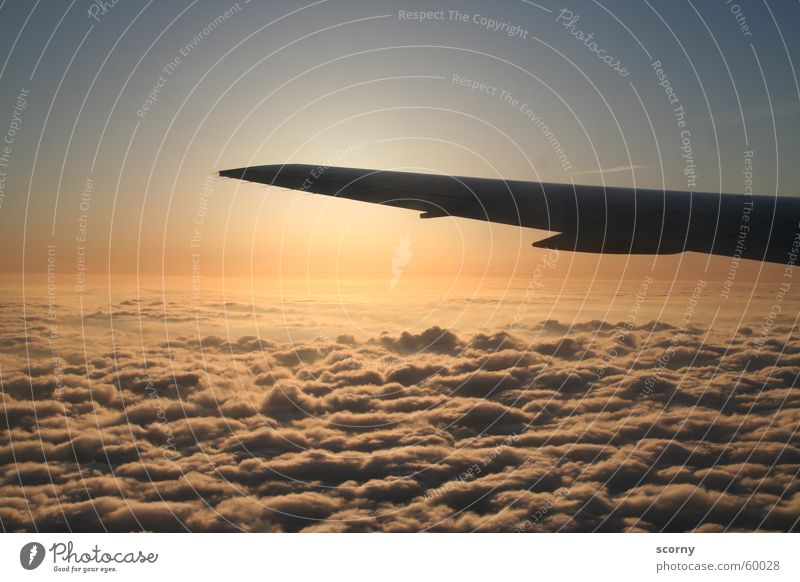 Sky Vacation & Travel Clouds Airplane Flying Trip Aviation USA Wing Dawn Expedition Covers (Construction) Aircraft Return Passenger plane Span