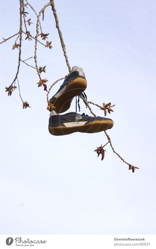 tree shoes Sneakers Footwear Tree Hang Air hung Branch Sky