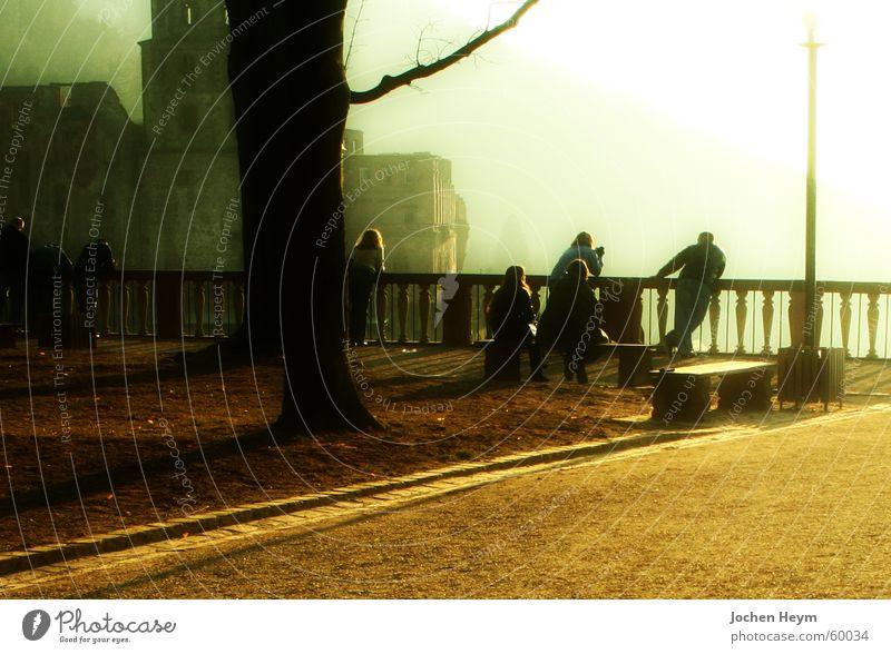 Heidelberg Castle Fog Tourist Territory Wall (barrier) Back-light Shadow Vantage point Sightseeing