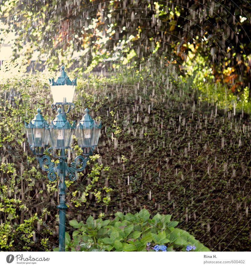 Plant Tree Cold Spring Garden Rain Climate Wet Street lighting Bad weather