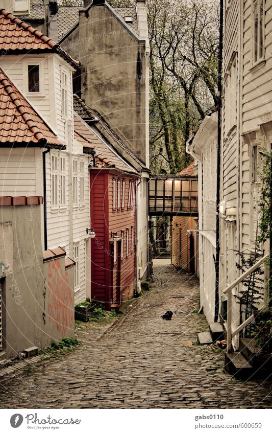 Black cat! House (Residential Structure) Village Fishing village Old town Deserted Facade Roof Cat Wood Feeding Simple Brash Creepy Brown Gray Red White Dream