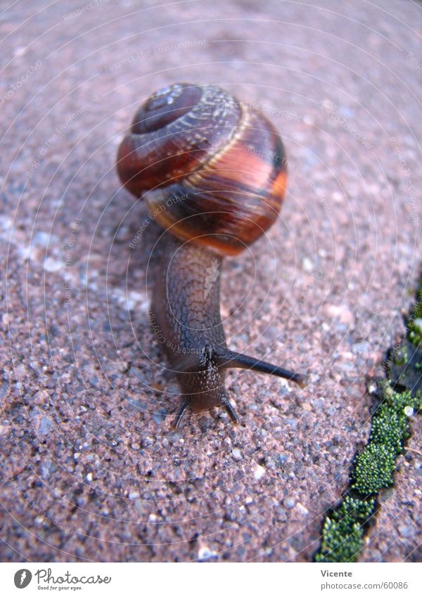 Tracks Snail Seam Feeler Paving stone In transit Slowly Snail shell Mucus Tentacle