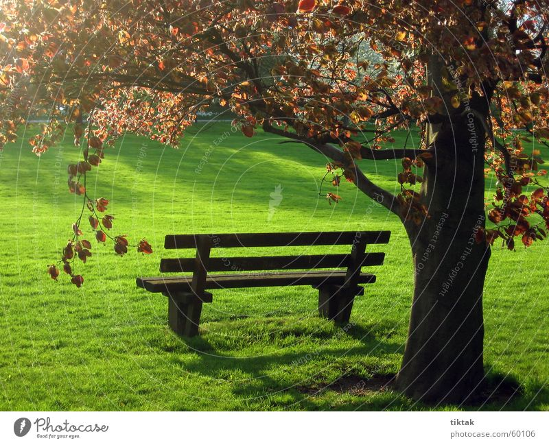 ParkBank Park bench Wooden bench Spring Grass Green Tree Leaf Calm Relaxation Back-light Bench Evening