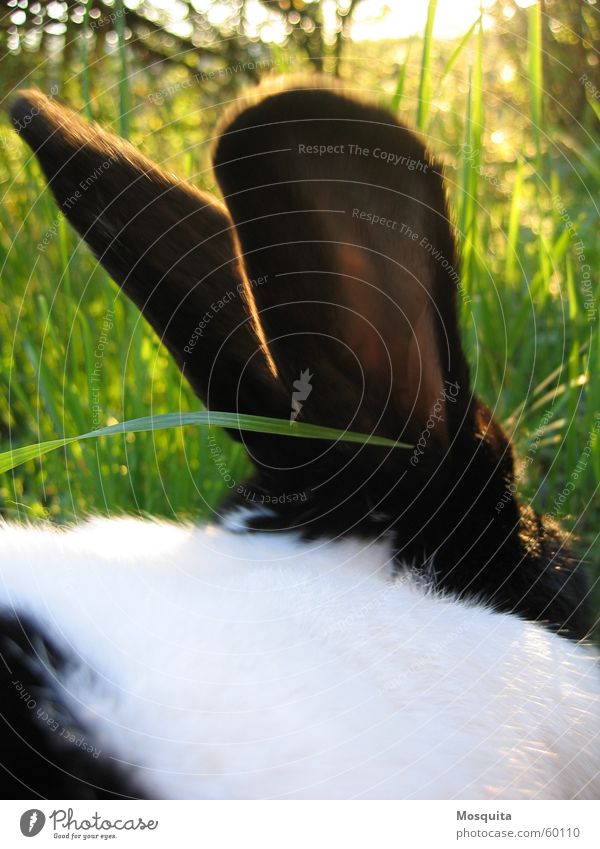a hare sat in the deep grass... Summer Nature Grass Pet Green Black White Hare & Rabbit & Bunny Dappled Two-tone Blade of grass Mammal bred rabbits