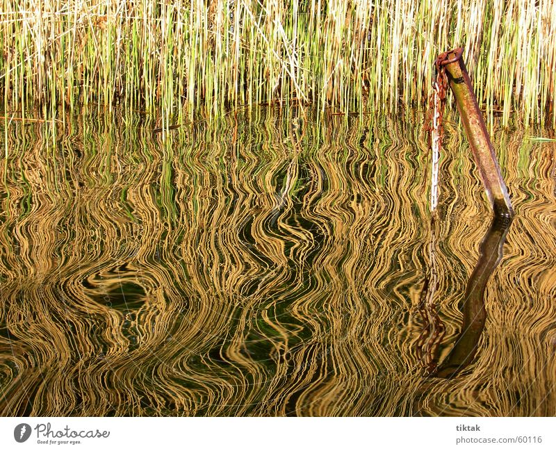 mirroring Common Reed Reflection Lake Waves Anchoring ground Iron Pattern ruffle Water Coast Footbridge Rust