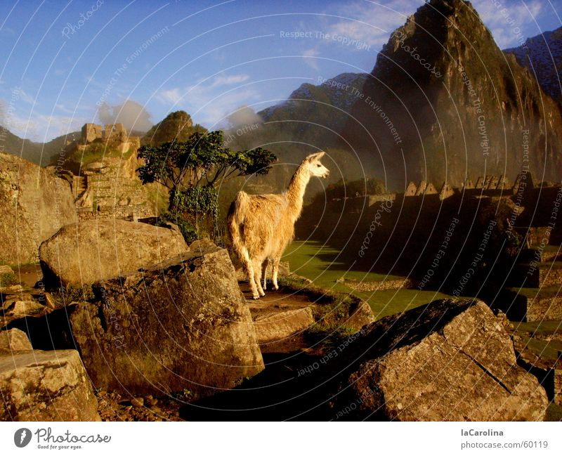 in the Inca Empire Sunrise Peru Fog Vantage point Machu Pichu Sunbeam Mountain Llama Nature Stone Blue Sky rocks Shadow