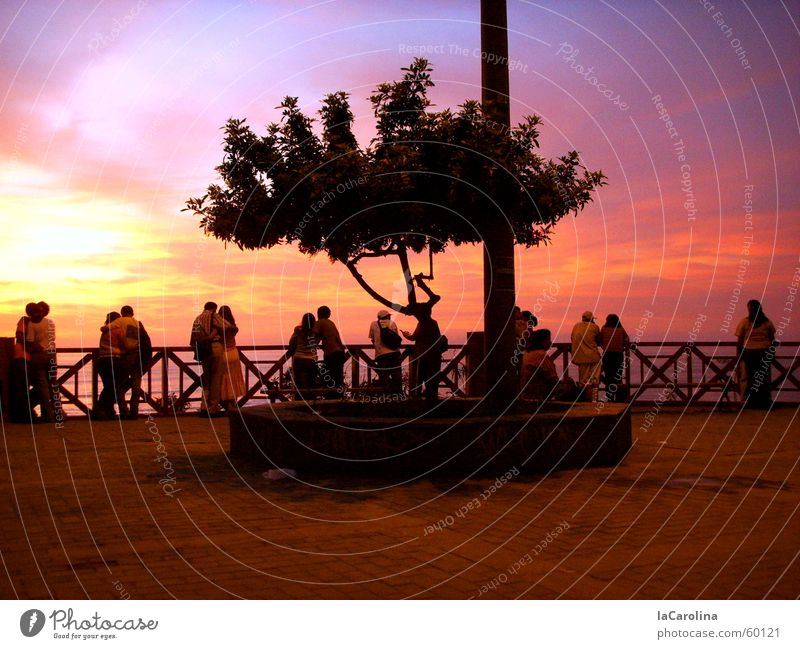 lovers in Lima Peru Sunset Light Moody Tree Romance Couple Human being Sky In pairs