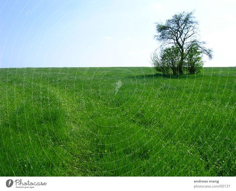 Sky Tree Loneliness Meadow Grass Field