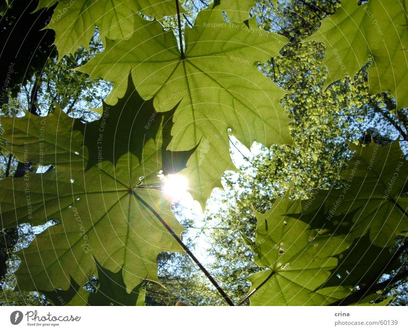 Spring sun in the green Green Leaf Forest Sun