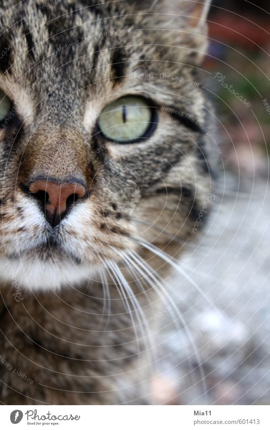 Cat Animal Eyes Observe Animal face Pet Pride Willpower Arrogant Conceited