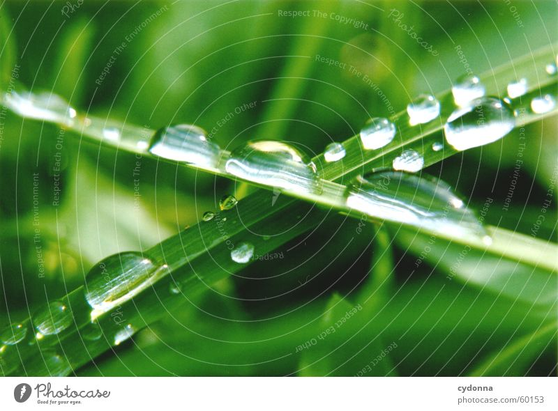 Nature Water Green Grass Drops of water Rope Blade of grass