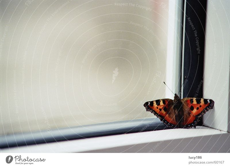 At the window Butterfly Window Window frame Red Yellow Feeler Black Red admiral Calm Loneliness Macro (Extreme close-up) Corner Frame Orange Patch